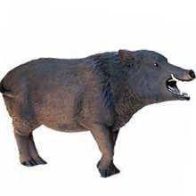 Wildschwein - WILD BOAR