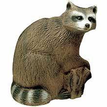 Racoon - Waschbär